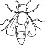 body-of-bee-coloring-page.gif