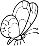 butterfly-8-coloring-page.gif