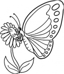 monarch-butterfly-coloring-page
