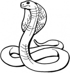 king-cobra-coloring-page